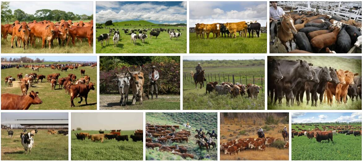 Argentine Agriculture and Livestock