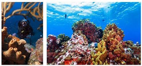 Saba Diving